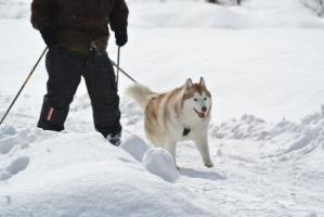 2013年3月ひるがの橇練習 008