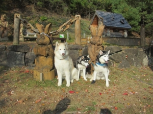 2013年11月りんご狩とグリーンゲーブル 292