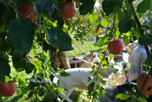 2013年11月りんご狩とグリーンゲーブル 155