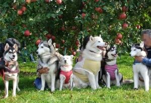2013年11月りんご狩とグリーンゲーブル 265