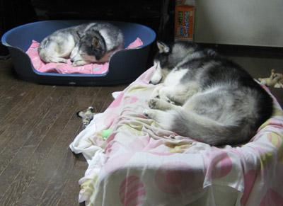 兄弟の寝姿