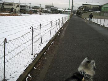 雪はどこ?
