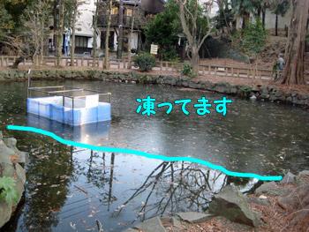 凍っているお池