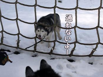網くぐりに挑戦