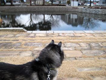 久し振りに水が張られたお池