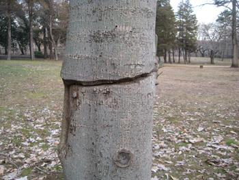 切れ込みのある木