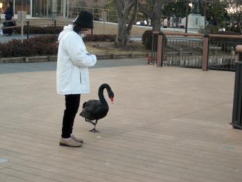 気の強い黒鳥さん