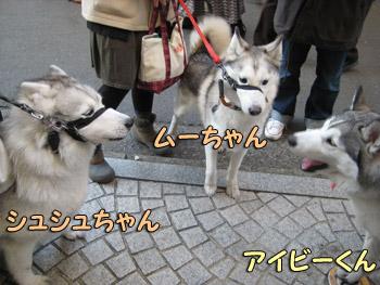 シュシュちゃん&ムーちゃん
