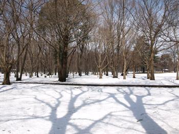 雪の野川公園