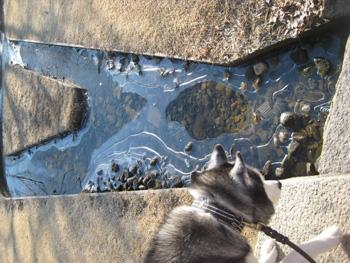 小川が凍ってる