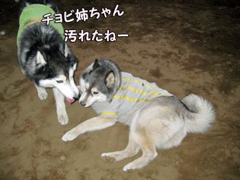 ポトフ&チョビ汚姉ちゃん