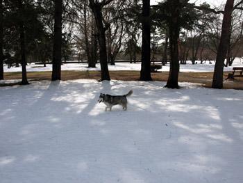 雪の中をお散歩
