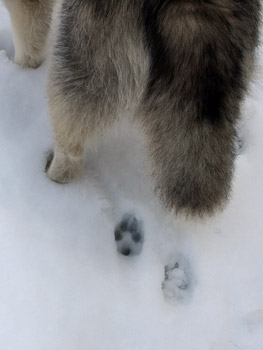 可愛い足跡