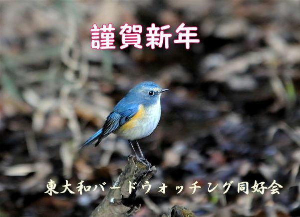 20100101 nakamura-ruribitaki-DSC_9457
