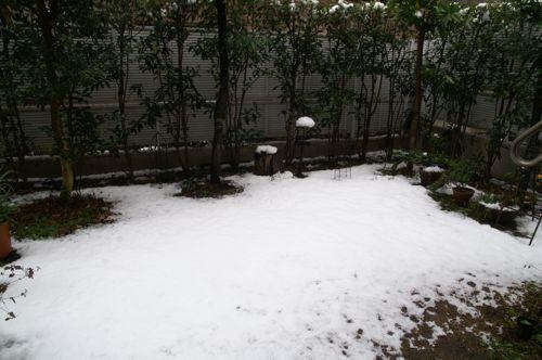 snow-gd1.jpg