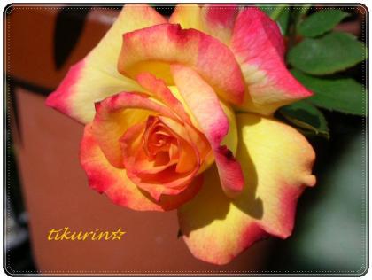 DSCN0386_convert_20111021142409.jpg