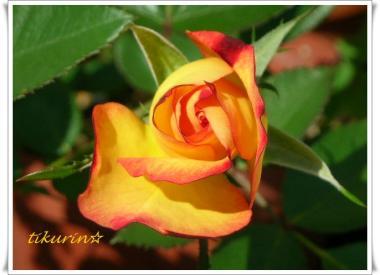 DSCN0393_convert_20111021142559.jpg