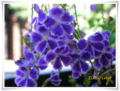 DSCN0413_convert_20111021142903.jpg