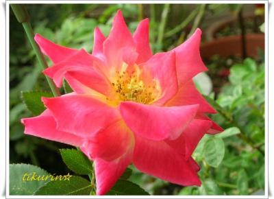 DSCN0441_convert_20111024144553.jpg