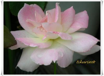 DSCN0442_convert_20111024144615.jpg