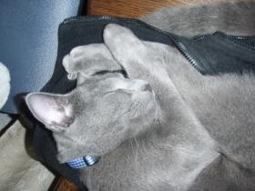 猫と寝ていても温かくない?