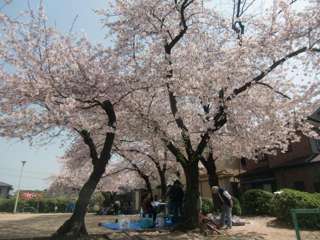 下草尾公園(2011春)1