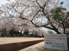 下草尾公園(2011春)2