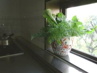 『グリーンウェーブ! 野菜を愛でるインテリア』 野菜の葉っぱ