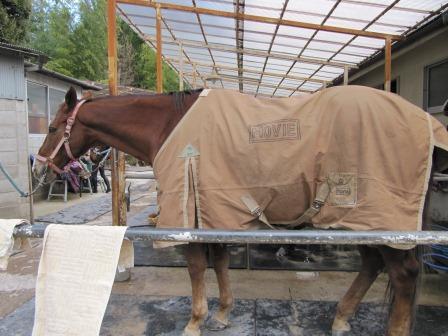Kさんの馬着とムービー