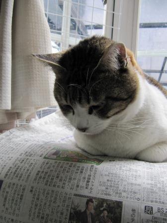 新聞読むニャー