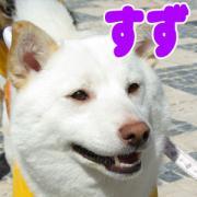IMGP1048_1.jpg