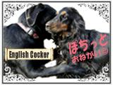 にほんブログ村 犬ブログ イングリッシュコッカースパニエルへ