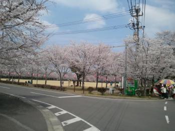 忠元桜01