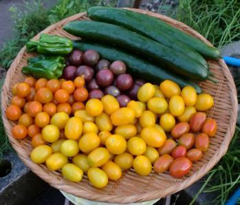 トマトがいっぱい^^