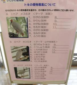 いしかわ動物園 トキ 命名式