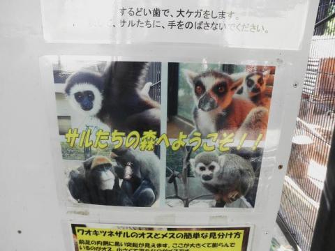いしかわ動物園 サルたちの森