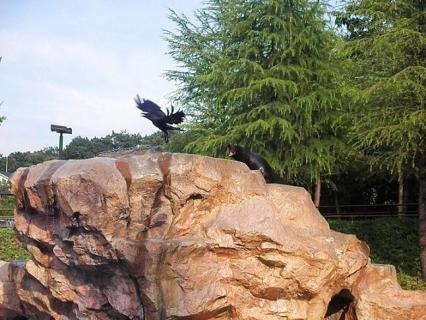 いしかわ動物園 カリフォルニアアシカ テンちゃん