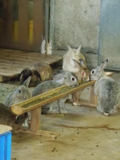 いしかわ動物園 ウサギ