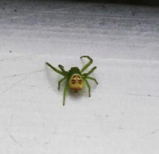 いしかわ動物園 クモ