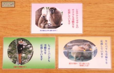 いしかわ動物園 合格祈願カード
