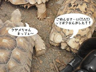 いしかわ動物園 ケヅメリクガメ ヒョウモンガメ