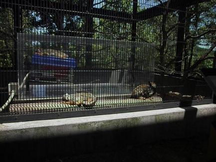 いしかわ動物園 コモンリスザル