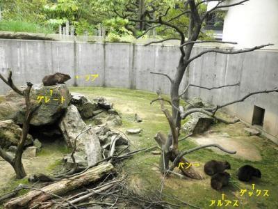 いしかわ動物園 ケープハイラックス