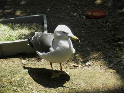 いしかわ動物園 水鳥たちの池