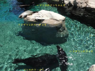 いしかわ動物園 カリフォルニアアシカ ゴマフアザラシ