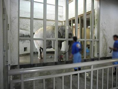いしかわ動物園 アジアゾウ