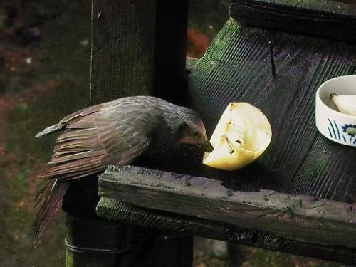 いしかわ動物園 水鳥たちの池・バードストリート