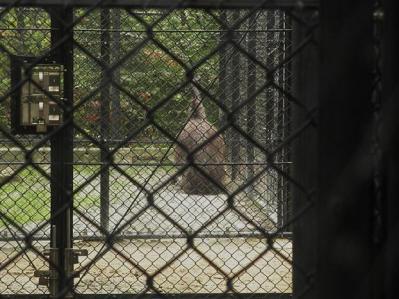 いしかわ動物園 エミュー
