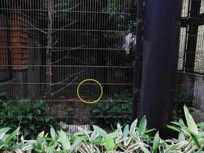 いしかわ動物園 オオタカ