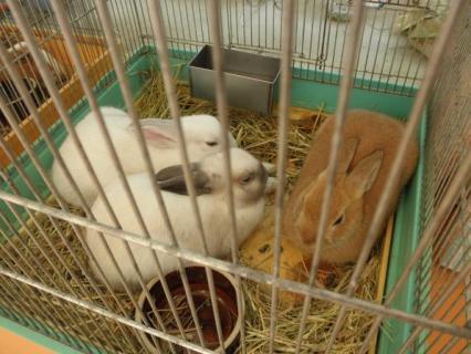 富山市ファミリーパーク ウサギ